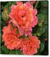 Vineyard Flowers  Canvas Print
