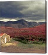 Vineyard House Canvas Print