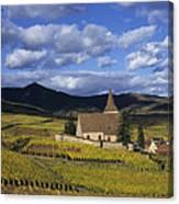 Vineyard In Alsace, France Canvas Print