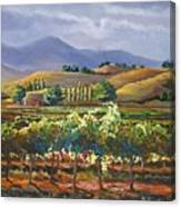 Vineyard In California Canvas Print