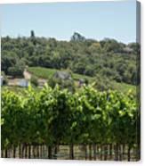 Vineyard In Sebastopol, Sonoma, California Canvas Print