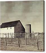 Vineyard In Winter Canvas Print