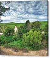 Vineyard On Cloudy Day Canvas Print