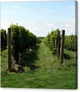 Vineyard On The Peninsula Canvas Print