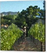 Vineyard Sauvignon Blanc Grapes Canvas Print
