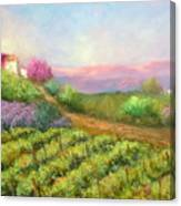 Vineyard Spring Canvas Print