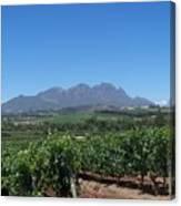 Vineyards Cape Town Canvas Print