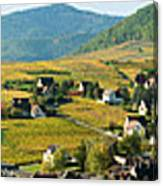 Vineyards In Autumn In The Morning Canvas Print