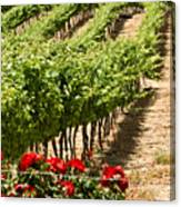 Vineyards In The Galilee  4 Canvas Print