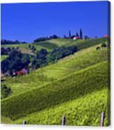 Vineyards Of Jerusalem Slovenia Canvas Print
