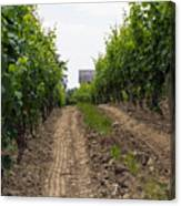 Vineyards Of Old Color Canvas Print
