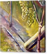 Vinnej Cvok Canvas Print