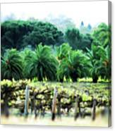 Vino Palmetto Canvas Print