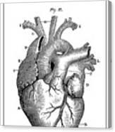 Vintage Anatomical Heart Canvas Print