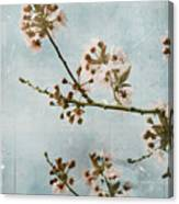Vintage Blossoms Canvas Print