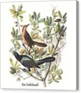 Vintage Boat-tailed Grackles Audubon Canvas Print