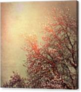 Vintage Cherry Blossom Canvas Print