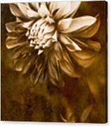 Vintage Dahlia Canvas Print