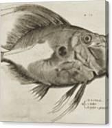 Vintage Fish Print Canvas Print