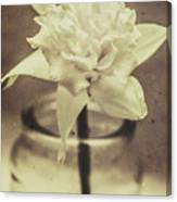 Vintage Floral Still Life Of A Pure White Bloom Canvas Print