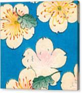 Vintage Japanese Illustration Of Dogwood Blossoms Canvas Print