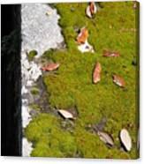 Vintage Moss Canvas Print