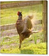 Vintage Pheasant Canvas Print