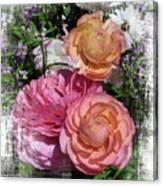 Vintage Ranunculus Canvas Print