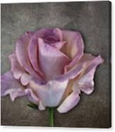 Vintage Rose On Gray Canvas Print