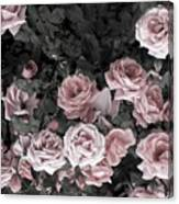 Vintage Roses In Pink 2  Canvas Print