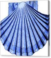 Vintage Scallop Shell Blue Canvas Print