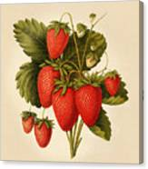 Vintage Strawberries Canvas Print