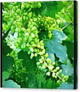 Vintage Vines  Canvas Print