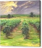 Vinyard Canvas Print