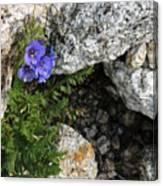 Violet Climbing  Canvas Print
