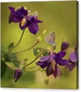 Violet Columbines Canvas Print
