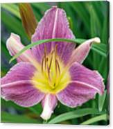 Violet Day Lily Canvas Print