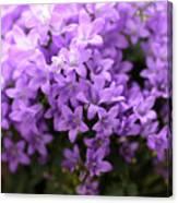 Violet Dream I Canvas Print