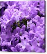 Violet Dream II Canvas Print