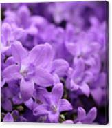 Violet Dream V Canvas Print