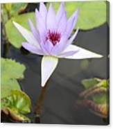 Violet Lotus Canvas Print