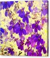 Violet Moths Canvas Print