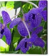 Violet Orchid Trio Canvas Print