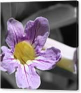 Violet Trumpet Vine Selective Color Canvas Print
