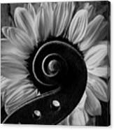 Violin Scroll And Sunflower In Black And White Canvas Print