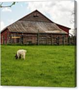 Virginia Farmyard Canvas Print