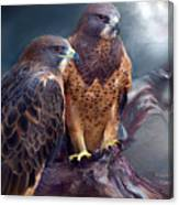 Vision Of The Hawk Canvas Print