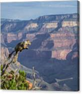 visit to Grand Canyon  Canvas Print
