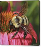 Visitor Up Close Coneflower  Canvas Print