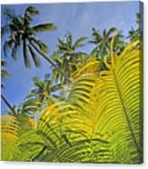 Viti Levu, Coral Coast Canvas Print